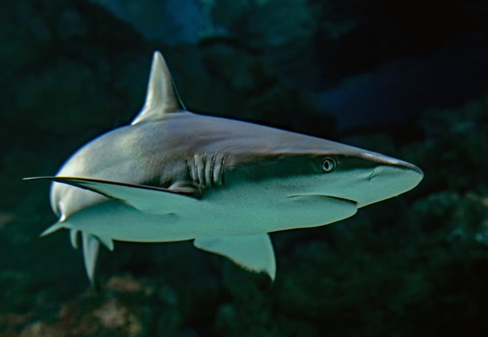 Project-Based Learning Spotlight: ELL Students Create a Blog About Sharks