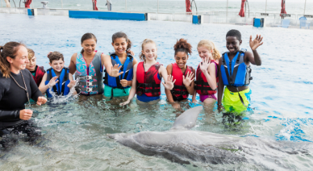 Students with life jackets standing in water watching a dolphin swim by them